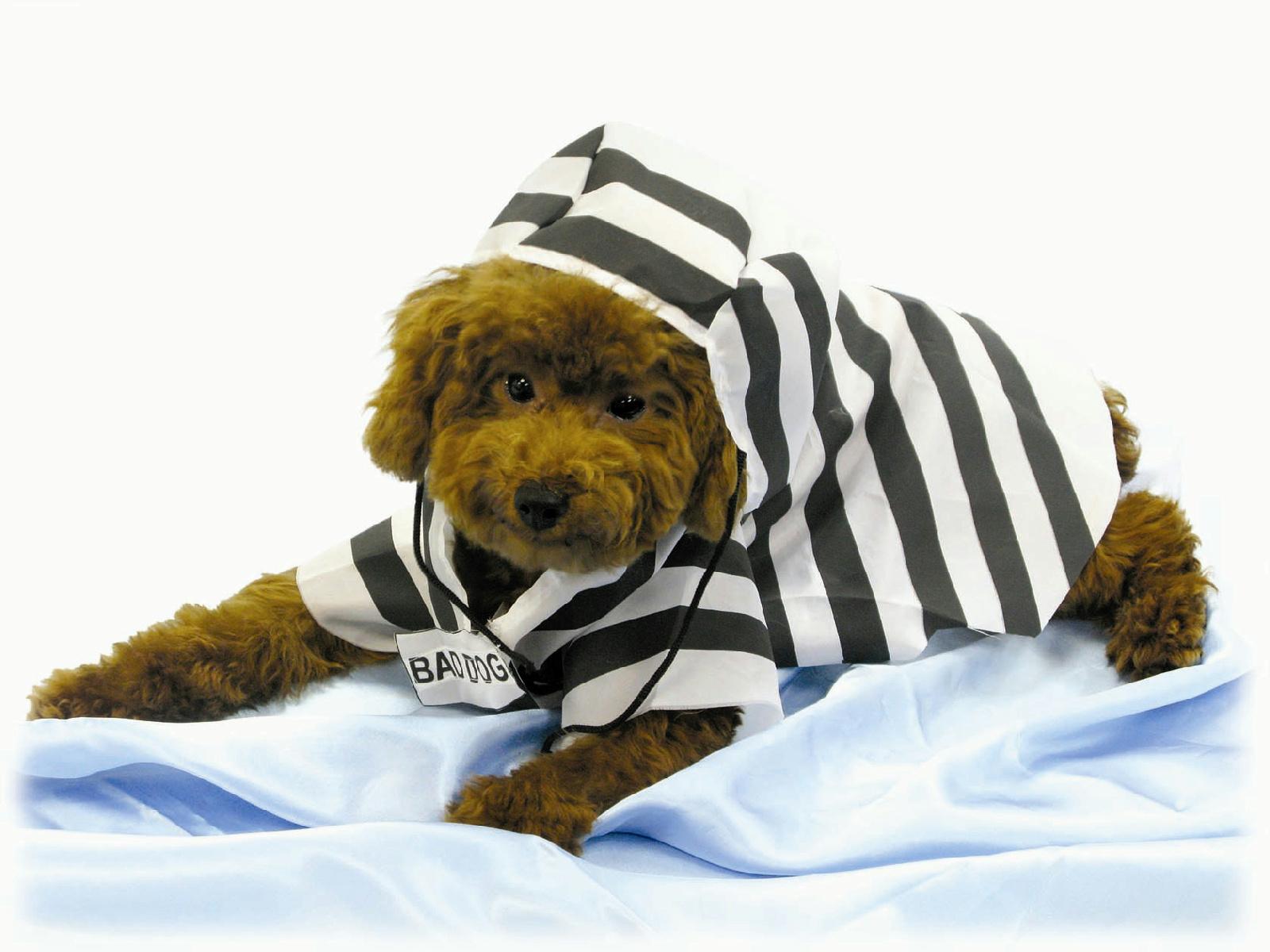 Prisoner Pet Halloween Costume Jail Bird Bad Dog